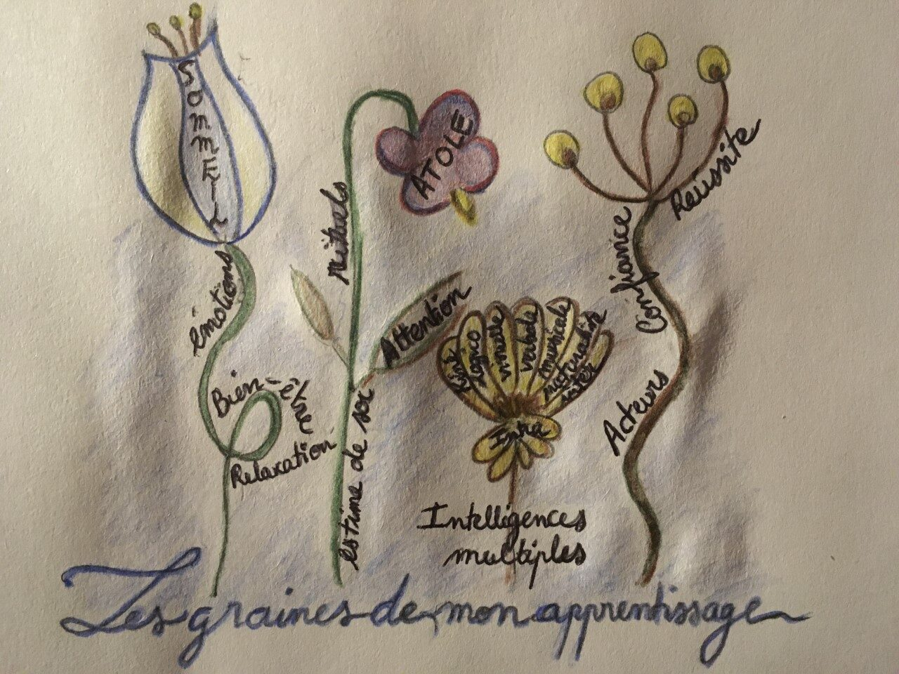 logo Les graines de mon apprentissage.jpg